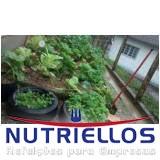serviço de alimentação escola particular em Guarulhos